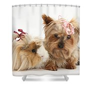 Yorkshire Terrier And Guinea Pig Shower Curtain