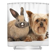 Yorkshire Terrier And Young Rabbit Shower Curtain