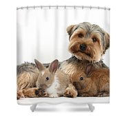 Yorkshire Terrier Dog And Baby Rabbits Shower Curtain
