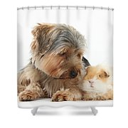 Yorkshire Terrier Dog And Guinea Pig Shower Curtain