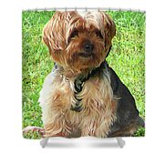 Yorkshire Terrier In Park Shower Curtain
