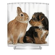 Yorkshire Terrier Pup With Rabbit Shower Curtain