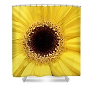 You Are My Sun Shower Curtain