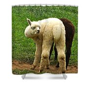 You Can't Sneak Up On Alpacas Shower Curtain