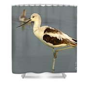 Young American Avocet Shower Curtain