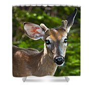 Young Buck 2 Shower Curtain