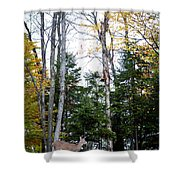 Young Buck In Autumn Shower Curtain