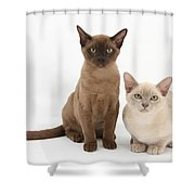 Young Burmese Cats Shower Curtain