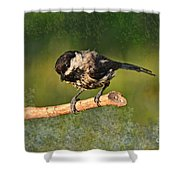 Young Chickadee Shower Curtain