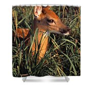Young Deer Laying In Grass Shower Curtain
