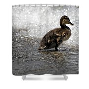 Young Duck On The Beach Shower Curtain