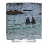 Young Elephant Seals Sparring Shower Curtain