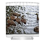 Young Geese Shower Curtain