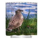 Young Gull Shower Curtain