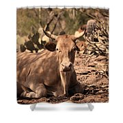 Young Longhorn Steer Shower Curtain