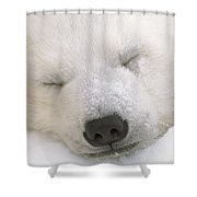 Young Polar Bear With Snow Dusted Shower Curtain