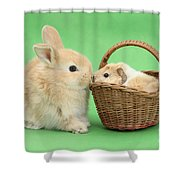 Young Rabbit With Baby Guinea Pig Shower Curtain