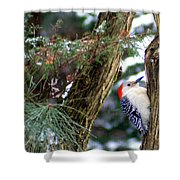 Young Red-bellied Woodpecker Shower Curtain