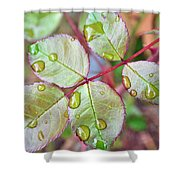Young Rose Leaves Shower Curtain