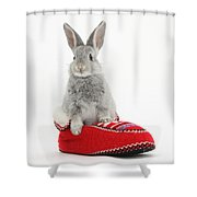 Young Silver Rabbit In A Knitted Slipper Shower Curtain