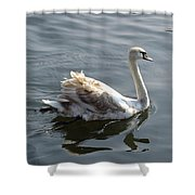 Young Swan Shower Curtain
