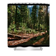Young Trees Shower Curtain