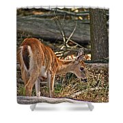 Young Whitetail Shower Curtain