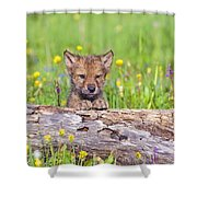 Young Wolf Cub Peering Over Log Shower Curtain