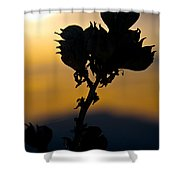 Yucca At Sunset Shower Curtain