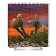 Yucca Blooming Sunset-moonset Shower Curtain