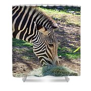 Zebra At Lunch Shower Curtain