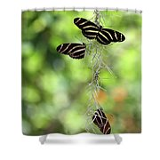 Zebra Butterflies Hanging Out Shower Curtain