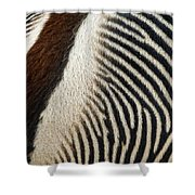 Zebra Caboose Shower Curtain