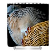 Zebra Dove From Above Shower Curtain