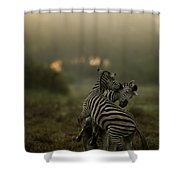 Zebra Equus Burchelli Shower Curtain