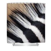 Zebra Equus Quagga Mane, Khama Rhino Shower Curtain