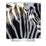 Zebra Face  Shower Curtain