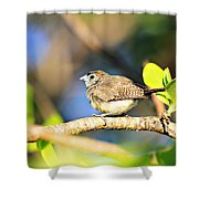 Zebra Finch Shower Curtain