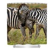 Zebra Hug Shower Curtain
