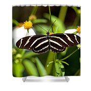Zebra Longwing And Flowers Shower Curtain