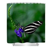 Zebra Longwing Shower Curtain