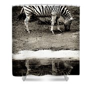 Zebra Reflection  Shower Curtain