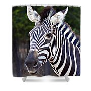 Zebra Symmetry  Shower Curtain