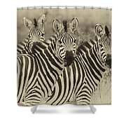 Zebra Trio Shower Curtain