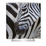 Zebras Close Up Shower Curtain