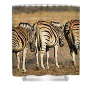 Zebras Three Shower Curtain