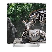 Zerbas Shower Curtain