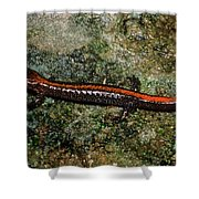 Zig-zag Salamander Shower Curtain