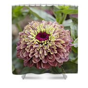 Zinnia Elegans Queen Red Lime Variety Shower Curtain