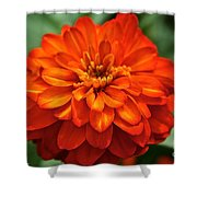 Zinnia Flare Shower Curtain